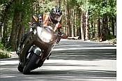 Consejos de conducción en carreteras de montaña y entre árboles