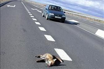 Los accidentes provocados por animales se duplican en Burgos y suman 1.600