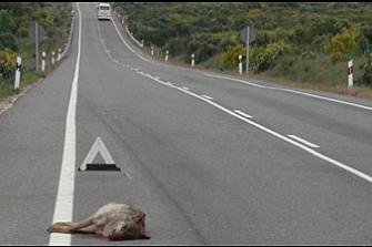 Barreras químicas contra el acceso de los animales a las carreteras